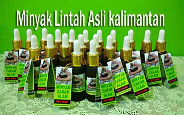 Harga minyak lintah kalimantan asli