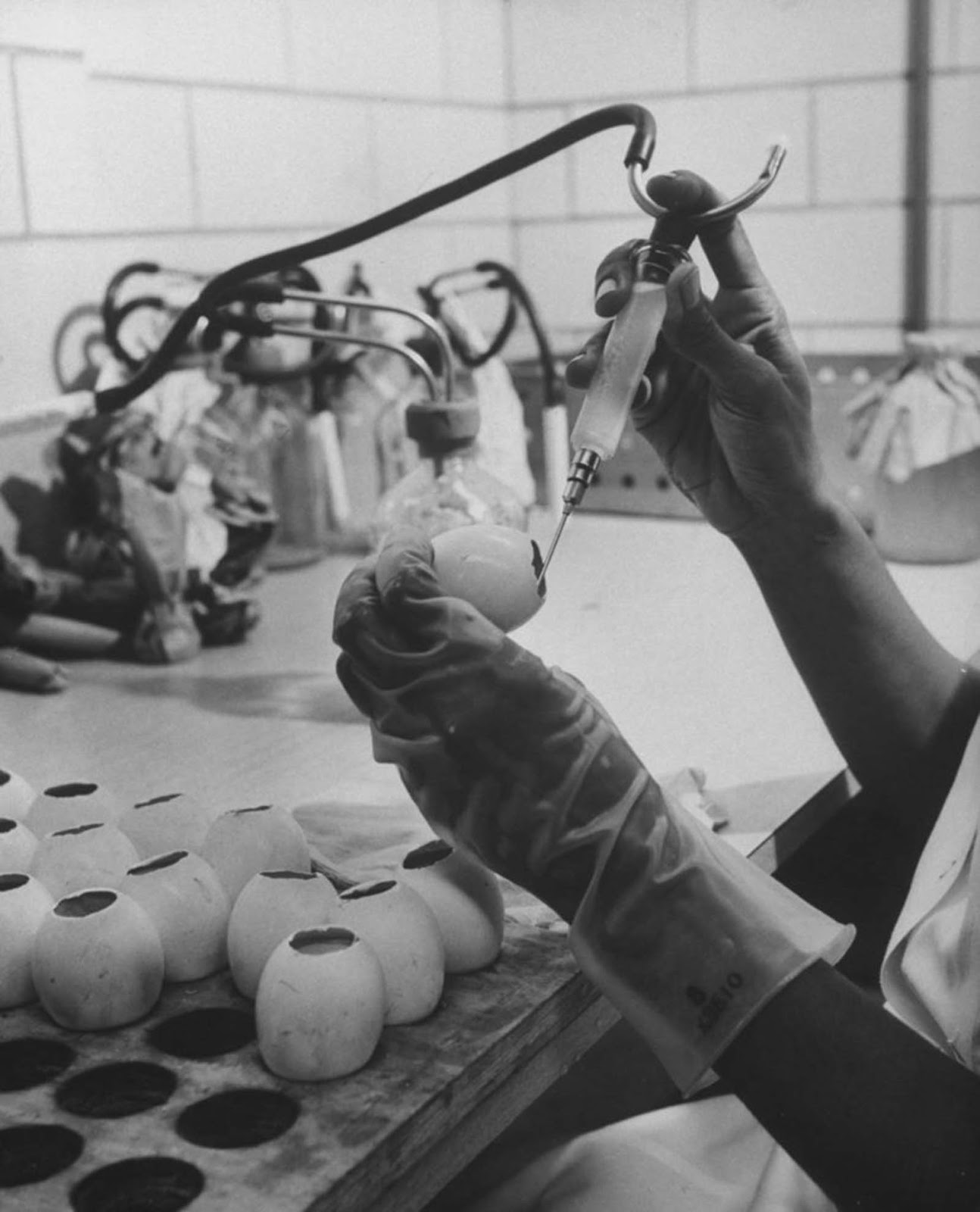 The production of the flu vaccine.