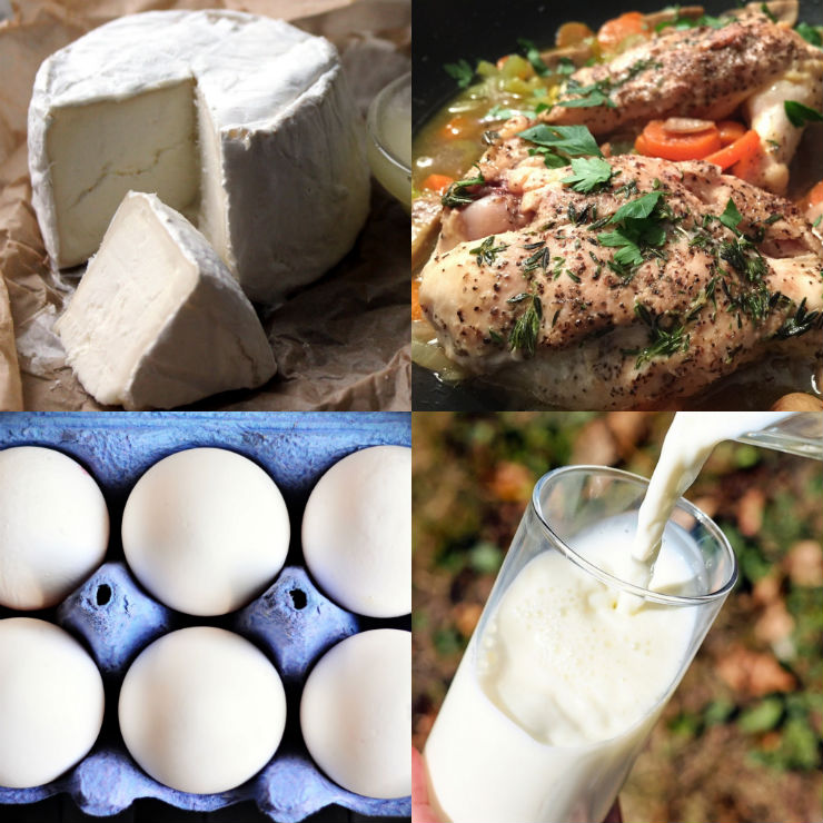 Protein rich food (Protein in paneer, Protein in chicken, Protein in egg white, Protein in milk