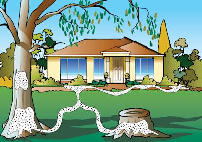 Định mức - Đơn giá phòng chống mối và xử lý côn trùng gây hại năm 2012