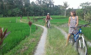 Bersepeda melewati persawahan di Ubud