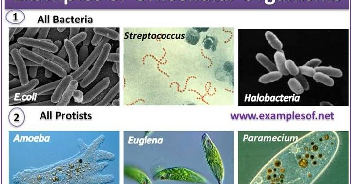 Examples of Unicellular Organisms | ExamplesOf.net