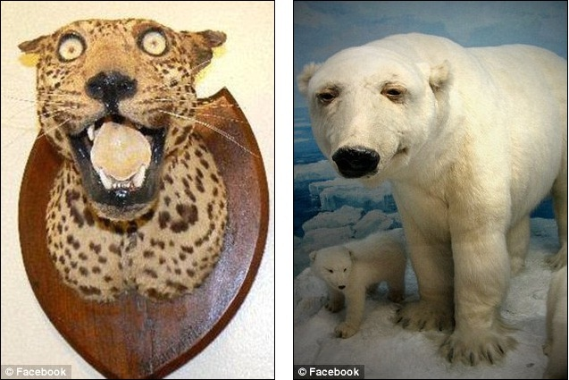 get stuffed the disturbing animals created when taxidermy goes