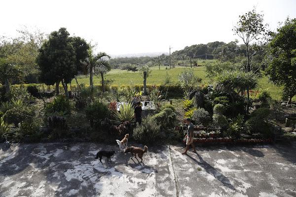 都蘭小花園4