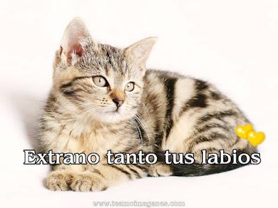 Imágenes de gatitos tiernos con frases y textos bonitos