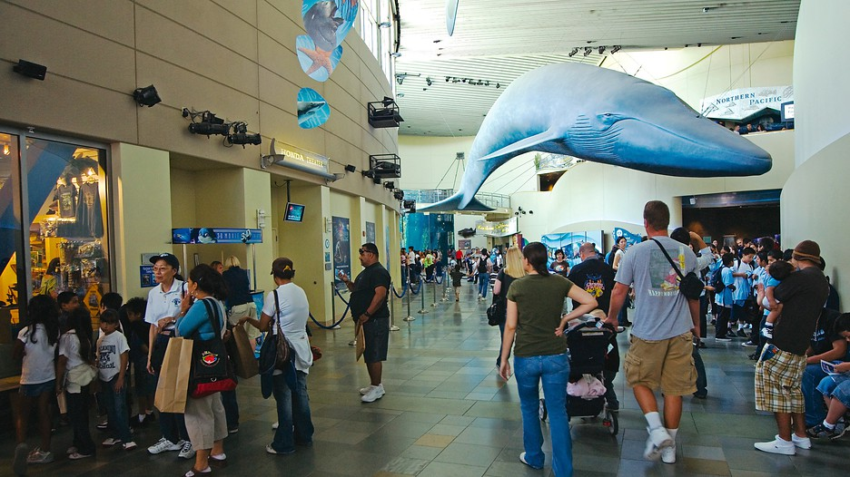 Informações Sobre O Aquário Do Pacífico Em Long Beach