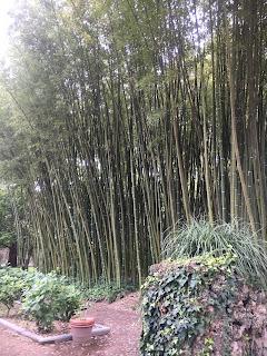 ピサ植物園の竹林