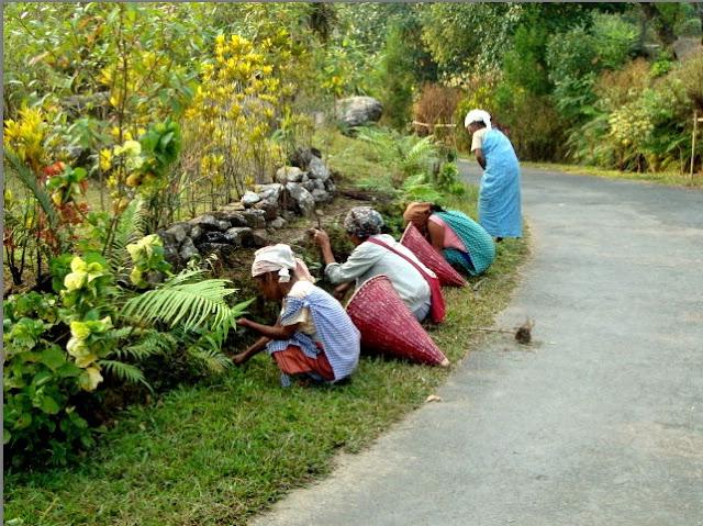 Desa Mawlynnong, India