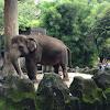 Kebun Binatang Ragunan Wisata Keluarga Murah di Jakarta