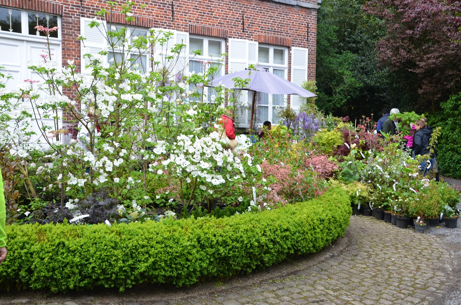 Mon Jardin En Avril mon jardin mes merveilles: la feuillerie - avril 2015 (2/3)