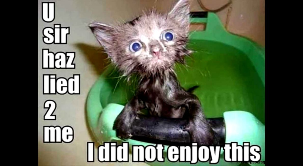 Cute Animals Pictures With Quotes: Cute Animals With Sayings