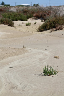 Sand beach dunes scrub drawings