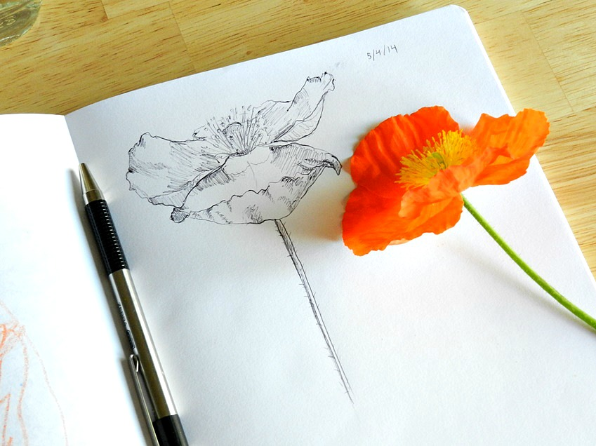 Poppy Ink Drawing by Elise Engh