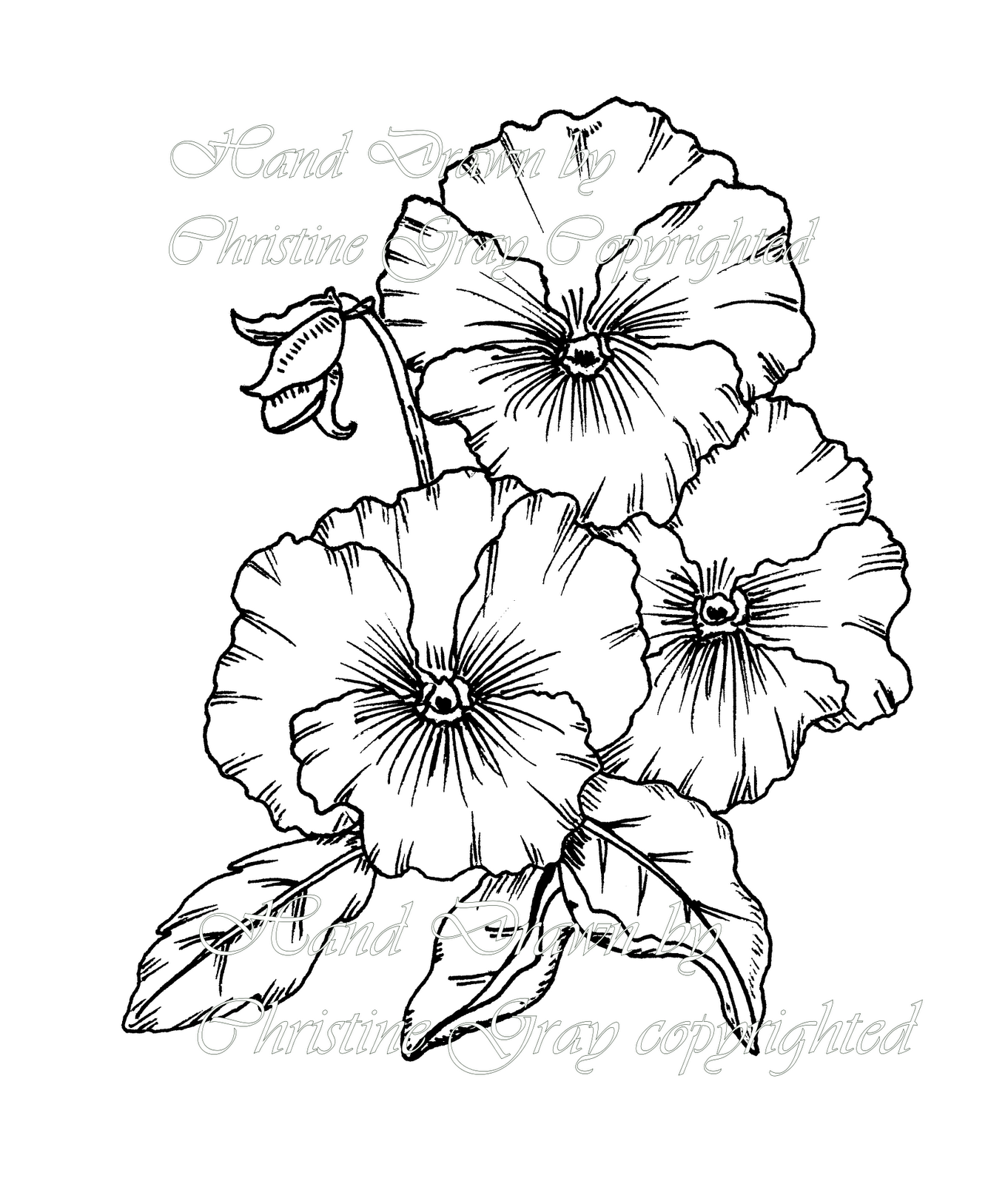 pansy flower drawing - photo #1