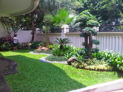 taman rumah minimalis dengan tanaman besar