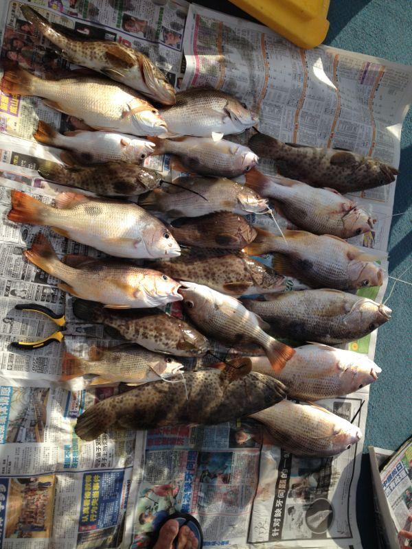 Ikan Ketang Ketang : ketang, Gourami,, Tilapia, Other, Species:, Fishing
