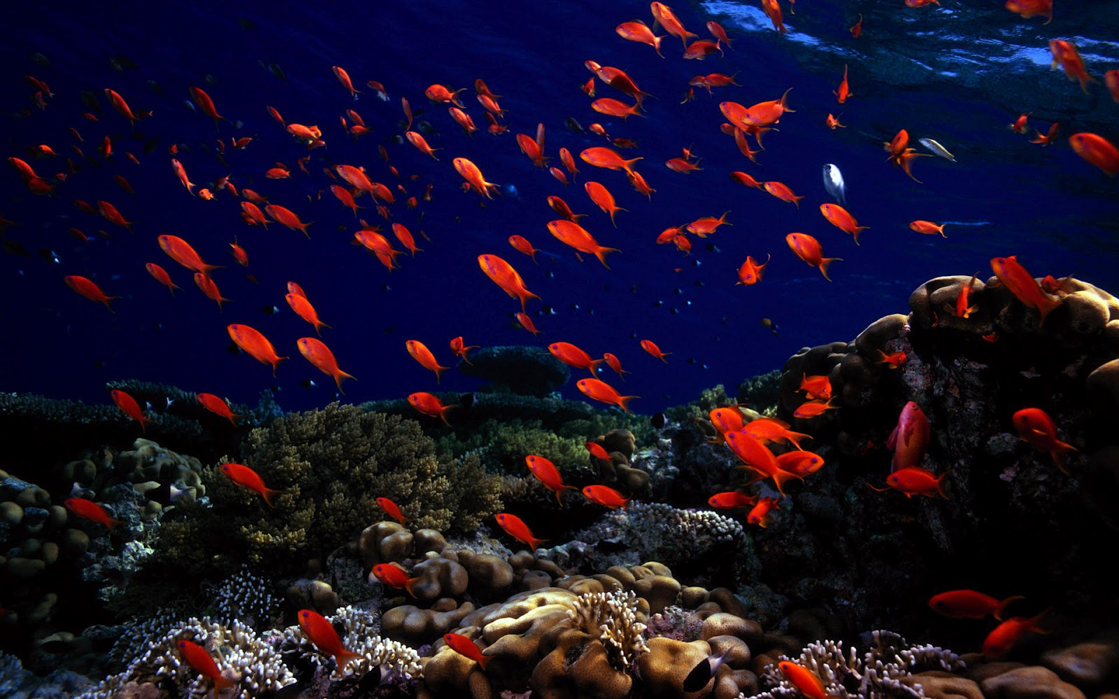 Must see   Wallpaper Horse Ocean - Ocean-life-wallpapers-marine-life-on-the-seabed-like-fish-plants-animals-hd-wallpaper-22  Gallery_68467.jpg