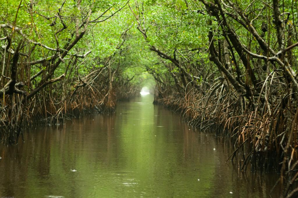 Masalah Dan Dampak Pemanfaatan Sumber Daya Alam Inirumahpintar Com