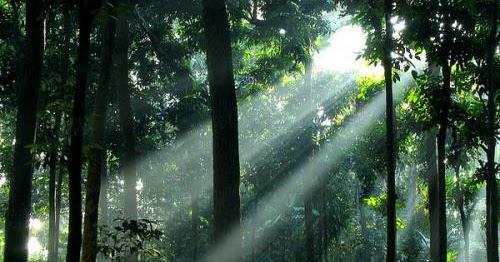 Lestarikan Bumi Kita, Lestarikan Hutan Kita