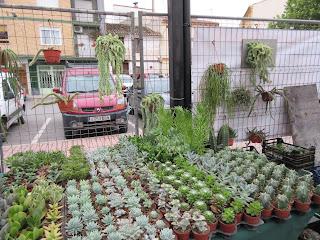 Resumen del XII congreso de cactus y suculentas