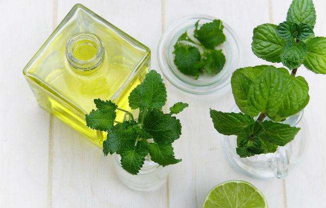 Foglie e olio essenziale di menta piperita
