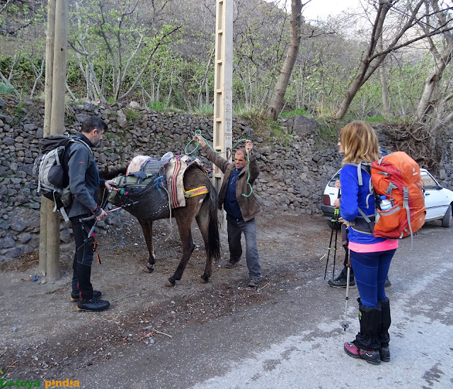 Preparando la mula e iniciando camino al Refugio de Toubkal