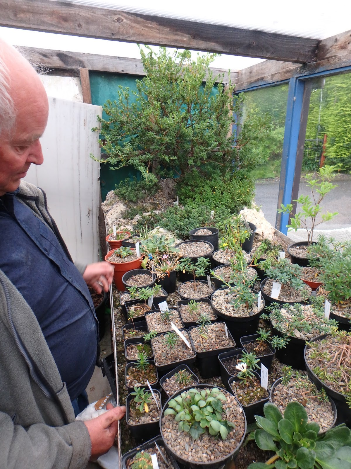 ... A Council Area Of Scotland Just North Of Edinburgh, To Visit Mr. Ian  Christie Of Christie Alpines. He Is A Prolific Grower Of Many Rock Garden  Plants, ...