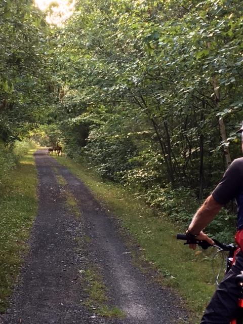 Three deer on the trail.