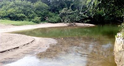 danau di hutan mangrove