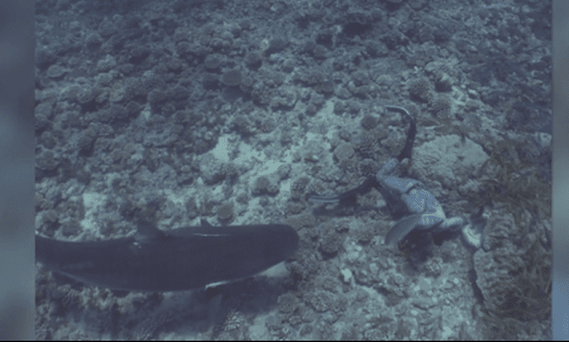 Καρχαρίας δάγκωσε δύτη στο κεφάλι (βίντεο)