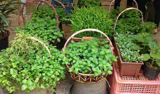 cara menanam sayuran pot