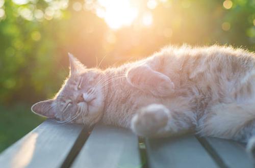 cat lying in sun