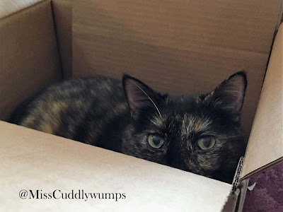 Paisley (tortie cat) in a box.