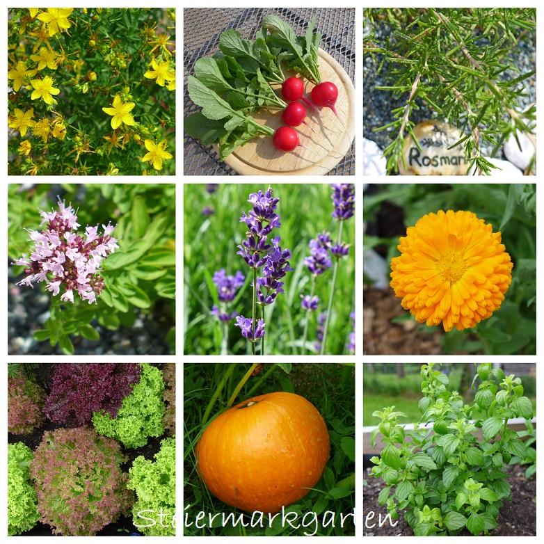 Collage-Pflanzen-Steiermarkgarten
