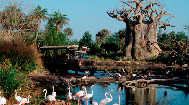 Kilimanjaro Safaris no Disney Animal Kingdom em Orlando