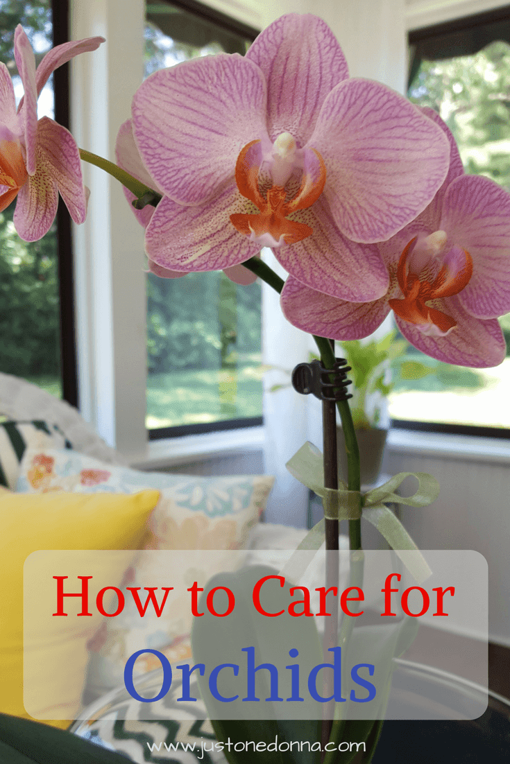 how to grow healthy happy orchids in your home just one donna. Black Bedroom Furniture Sets. Home Design Ideas