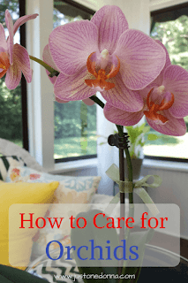Seven Tips for Orchid Care