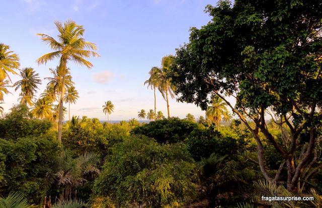 Mata nativa e coqueiral na Vila do Diogo, Bahia