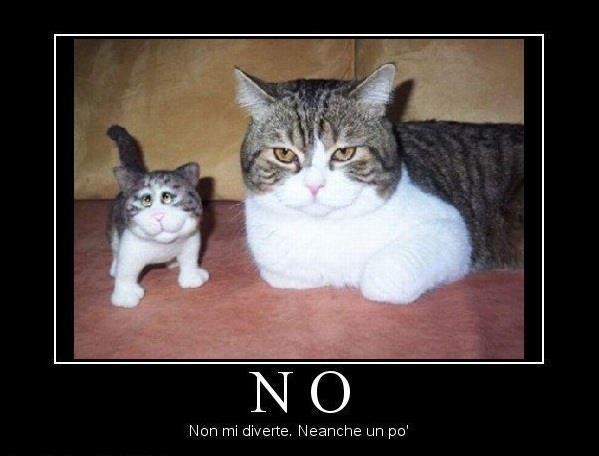 abbastanza I Gatti più Divertenti del Web EY31