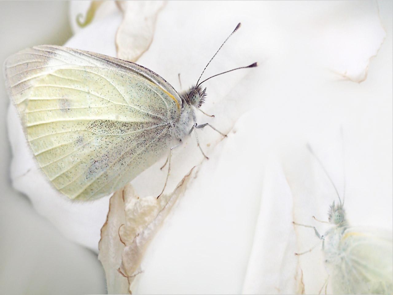 butterfly wallpaper design - photo #31