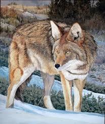 Serigala Terbesar