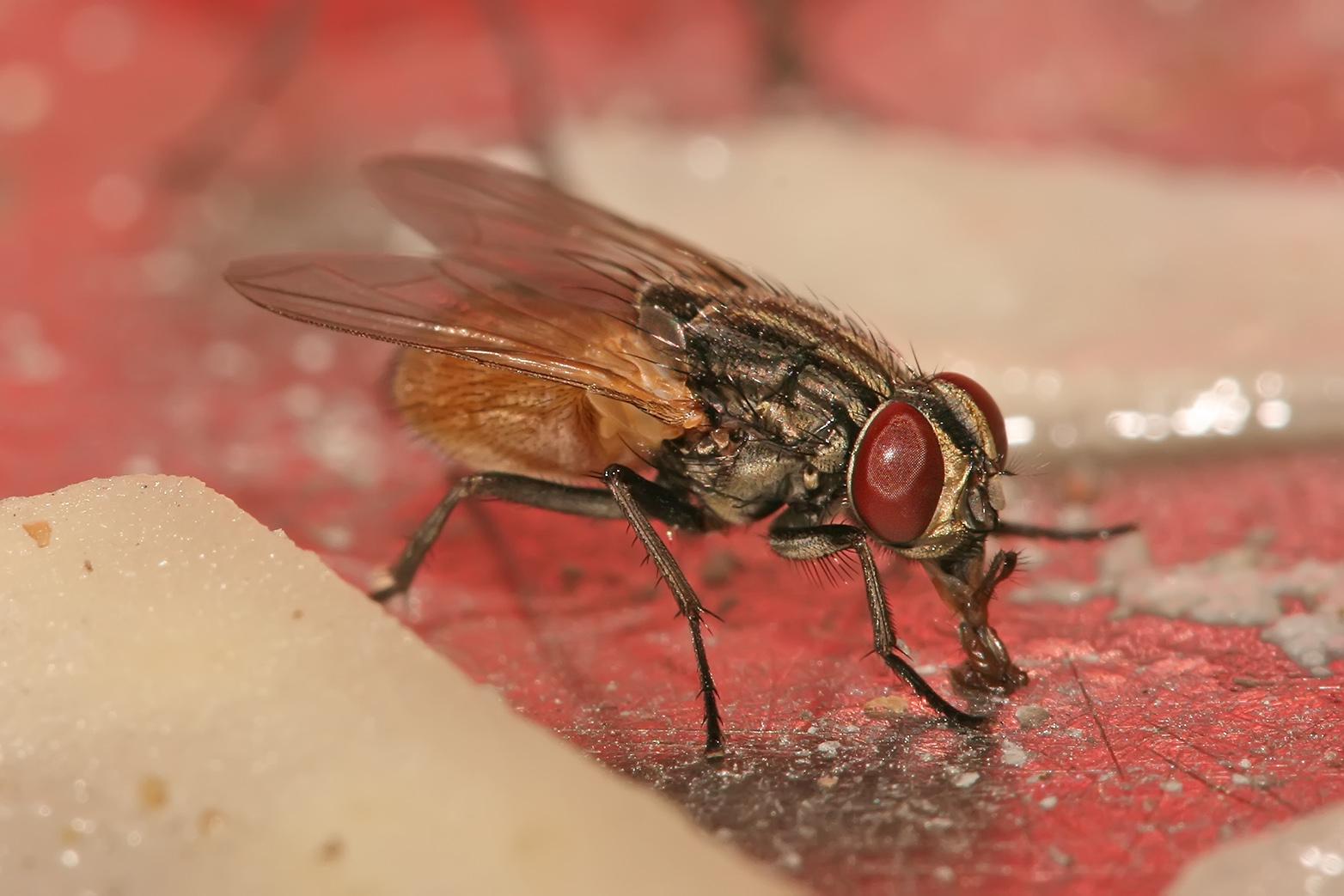 Comment Se Débarrasser De Moucherons Naturellement j'aime ma maison: comment se débarrasser des mouches