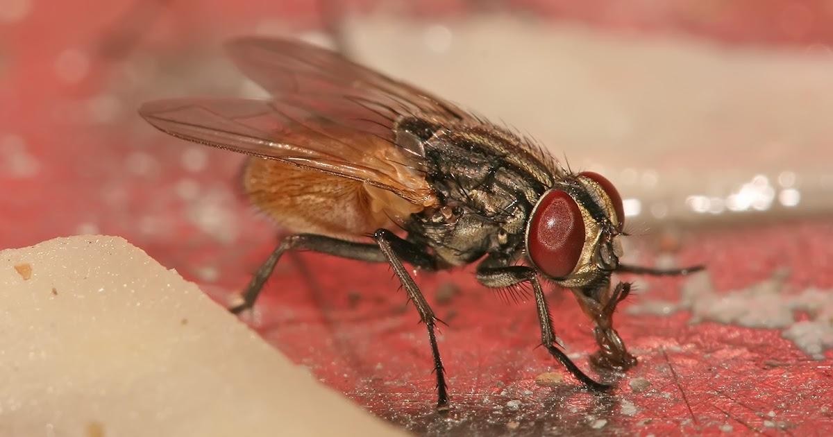 J 39 aime ma maison comment se d barrasser des mouches for Attrape mouche maison