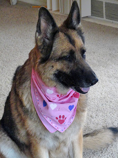 diy-custom-dog-bandana-tutorial