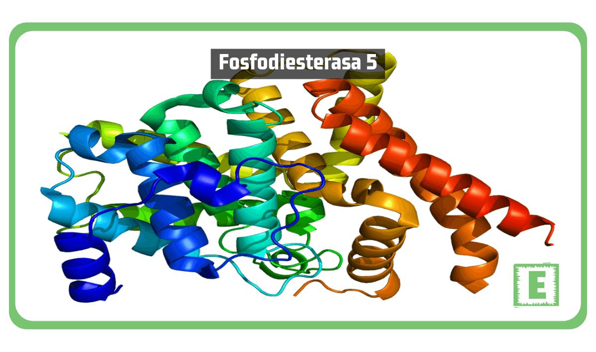 Fosfodiesterasa 5