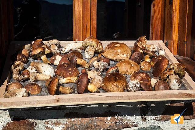 Fungi su una finestra di Monterecchio