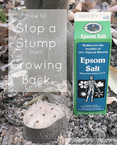 How to Stop a Stump from Growing Back, Organically.  Tutorial on using Epsom Salts by Lavende&Lemonade
