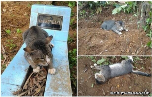 Kucing+Menangis
