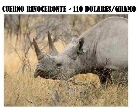 cuerno rinoceronte