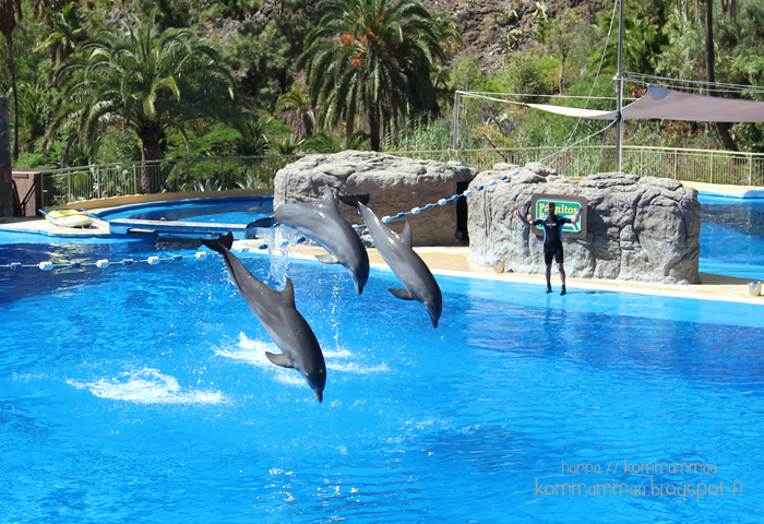 delfiinit dolphins delfinaario palmitos park gran canaria kokemuksia kanariansaaret espanja